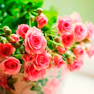 floristica1